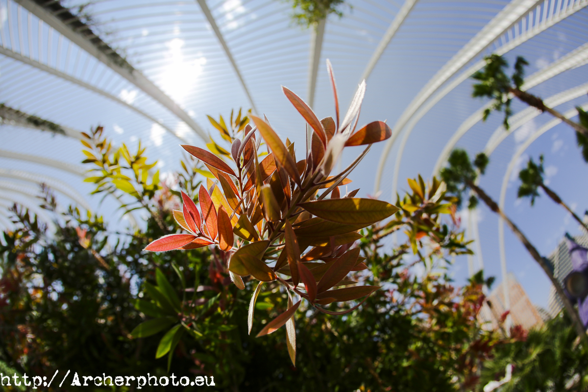 Umbracle, el jardín de la Ciudad de las Artes y las Ciencias de Valencia de Santiago Calatrava. Foto: Archerphoto