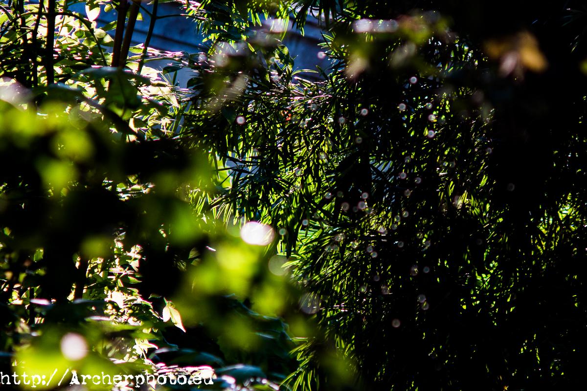 Jardí Botànic de València, de Sergi Albir