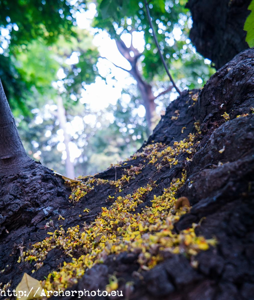 Jardín Botánico de Valencia, por Archerphoto, fotógrafo profesional