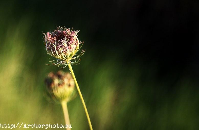Fotógrafo profesional,Valencia,España