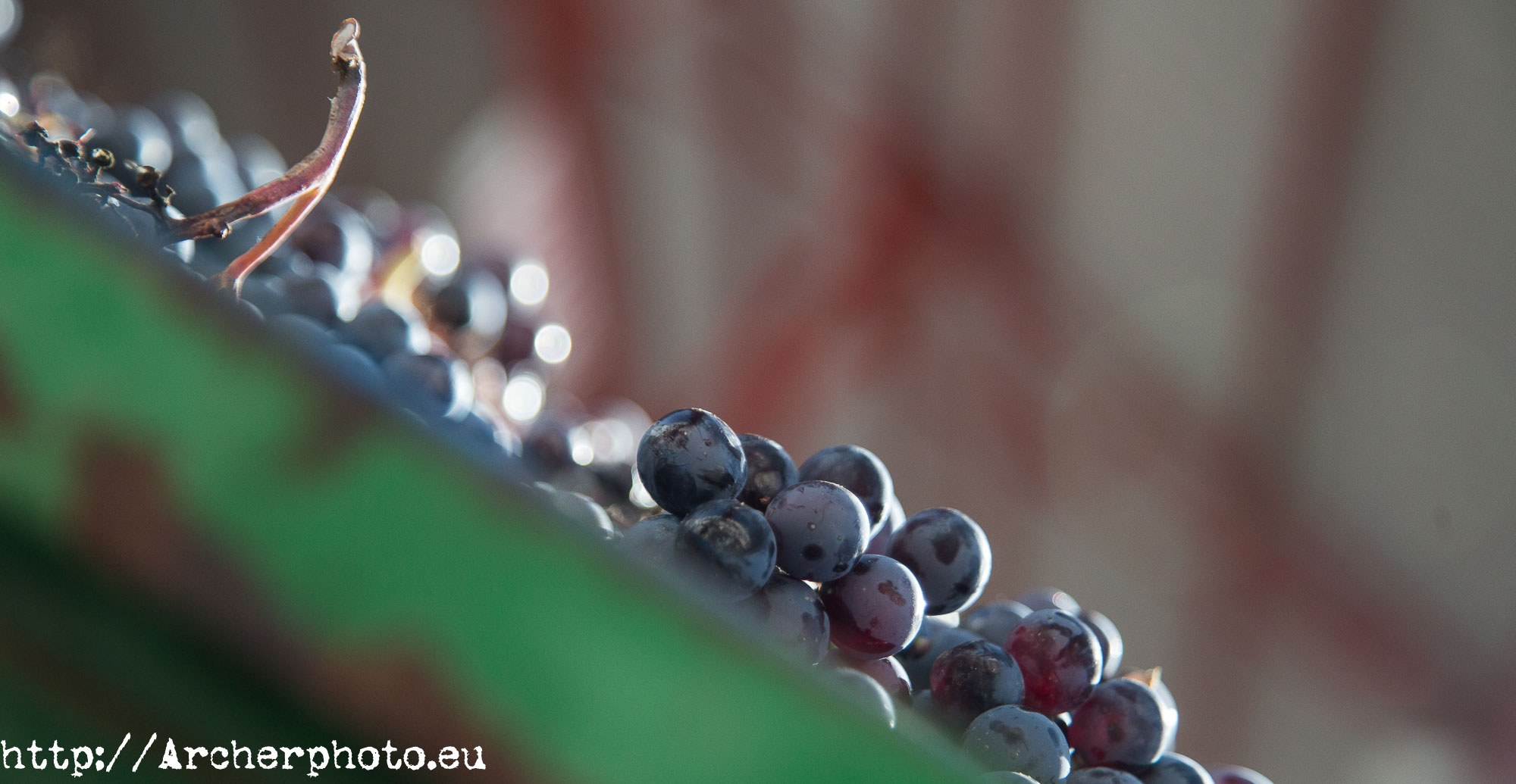 Haciendo vino en Yecla, Murcia, por Archerphoto, fotógrafo profesional