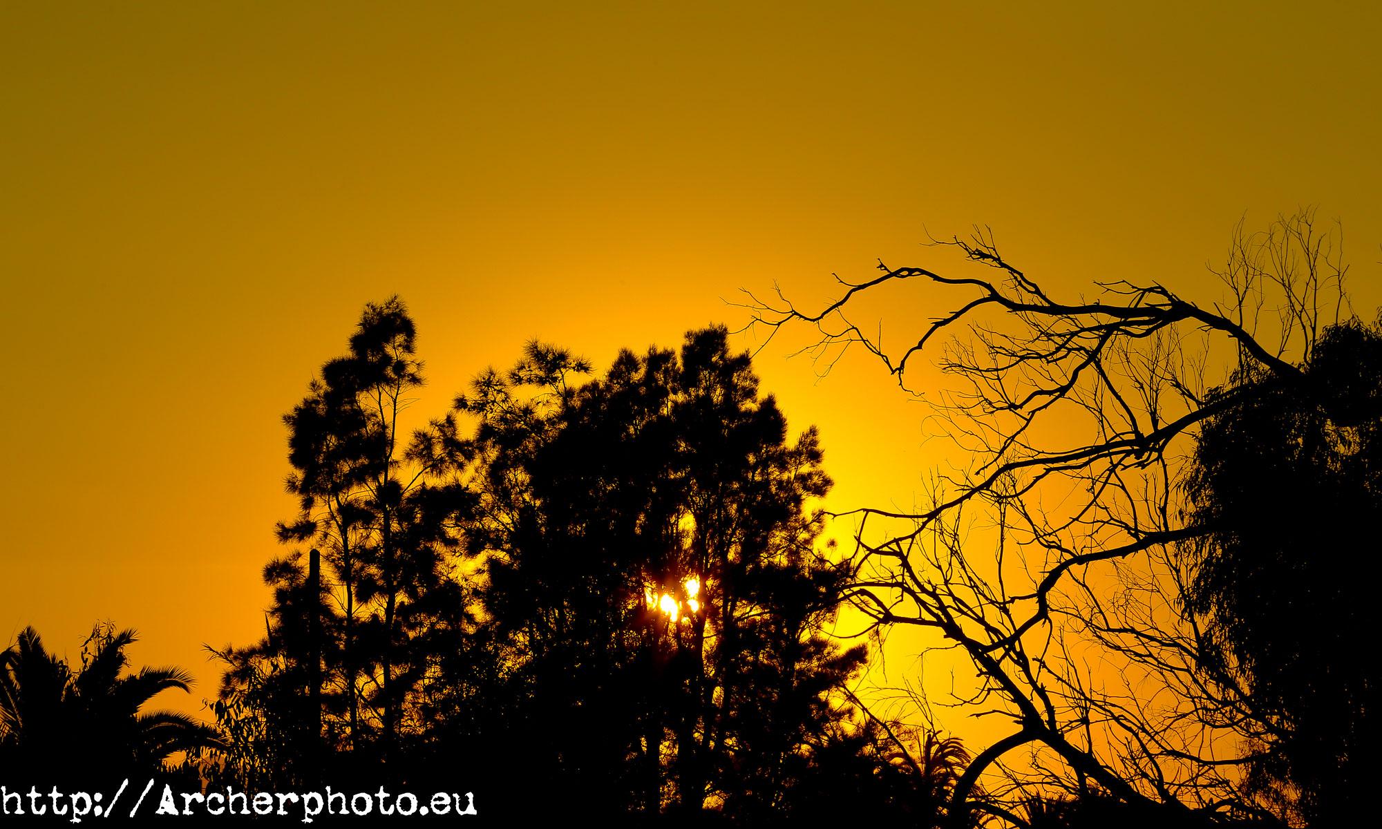 fotografo profesional Valencia España, Archerphoto, imagen de cabecera,atardecer con árboles a contraluz