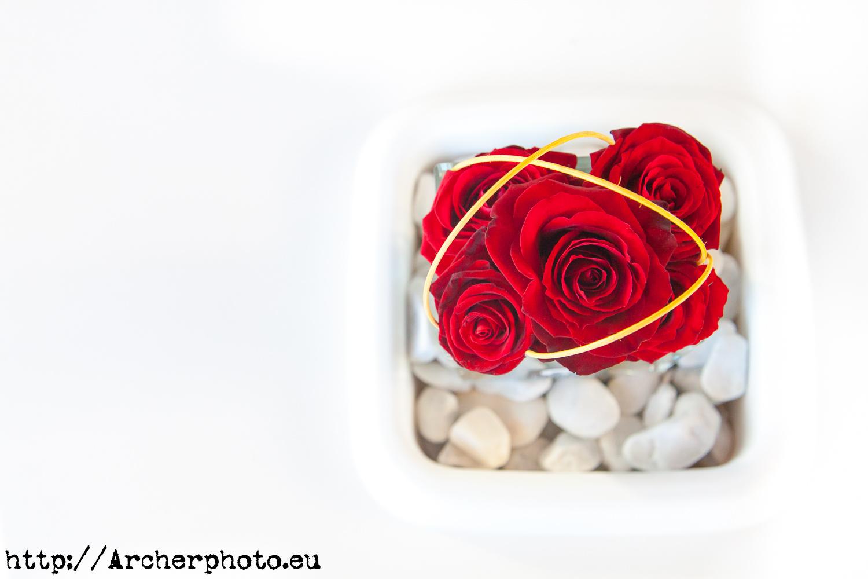 rosas en la Semana de la Moda de Valencia, imagen de 2010, fotógrafo profesional