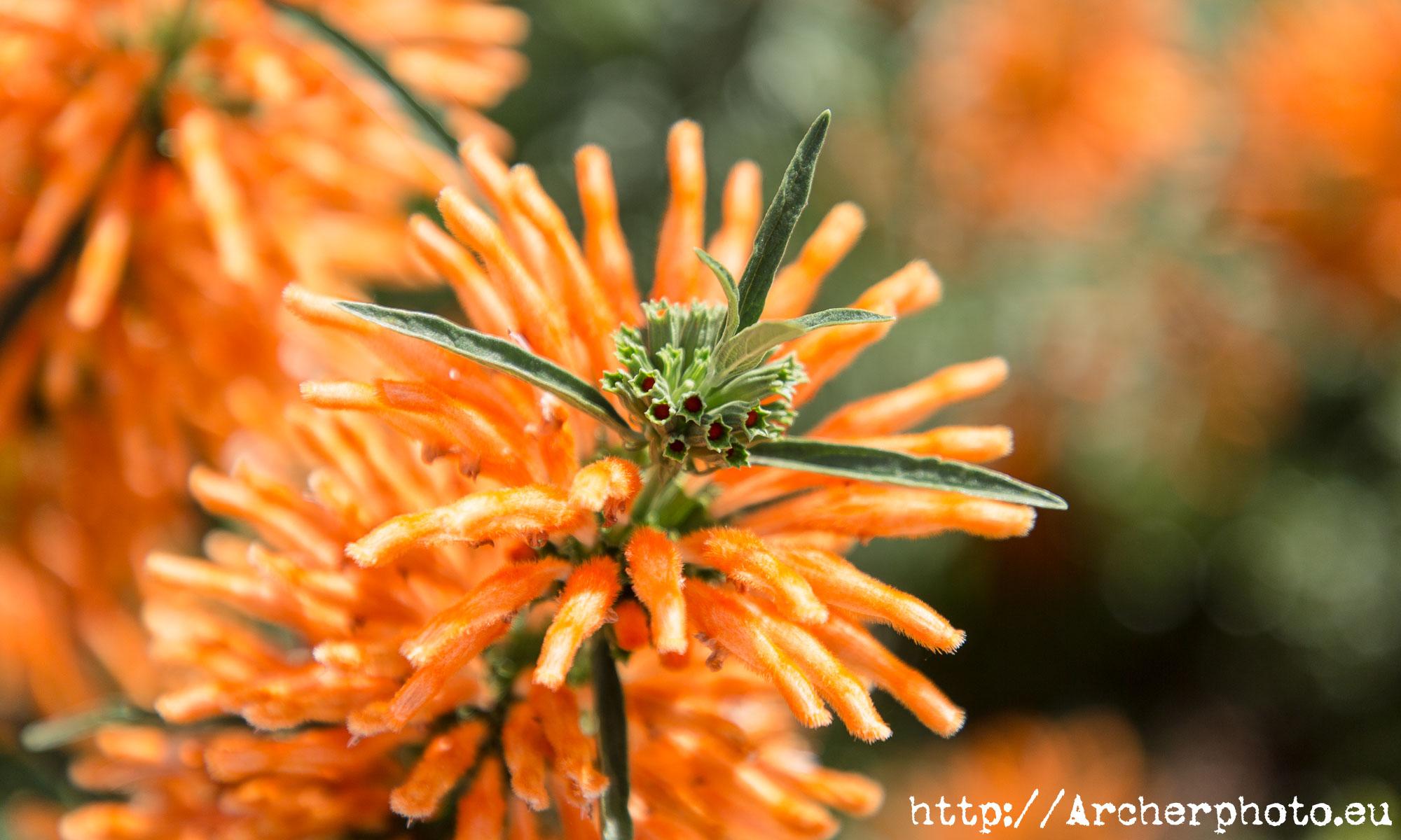 Flores en Parque Central de València, por Archerphoto