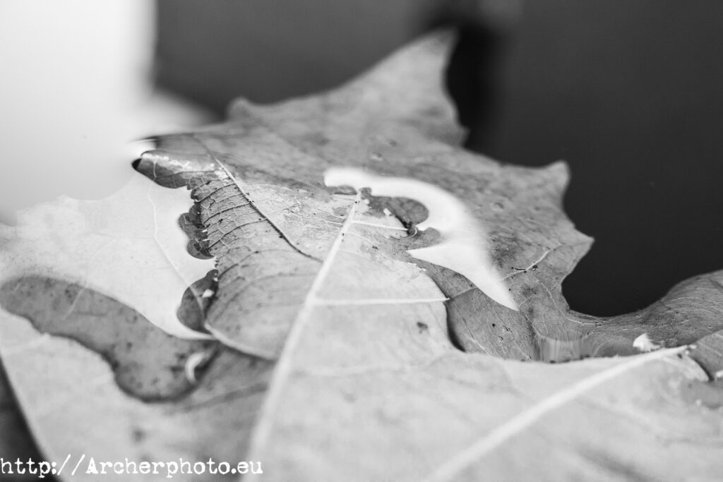 Hoja en el suelo con enfoque selectivo, fotografo profesional Archerphoto