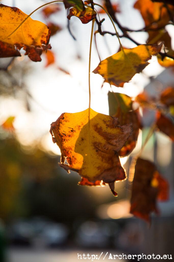 Hojas, fotos de una tarde de otoño en 2020 en València