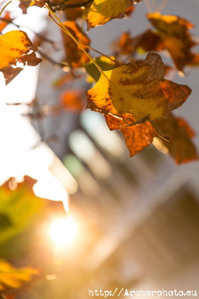 fotos de una tarde de otoño en 2020 en València, hojas, L'Exposició, fotógrafo profesional