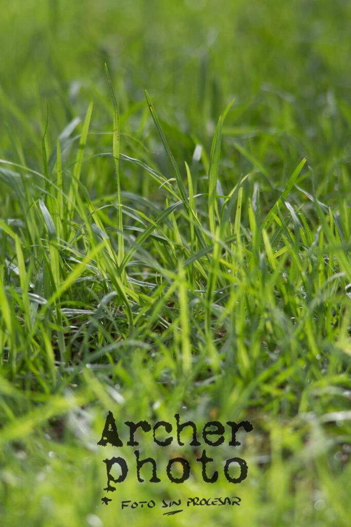 Ejemplo de foto con el Tamron 200-400 sin procesar, Archerphoto, fotógrafo en València, hierba