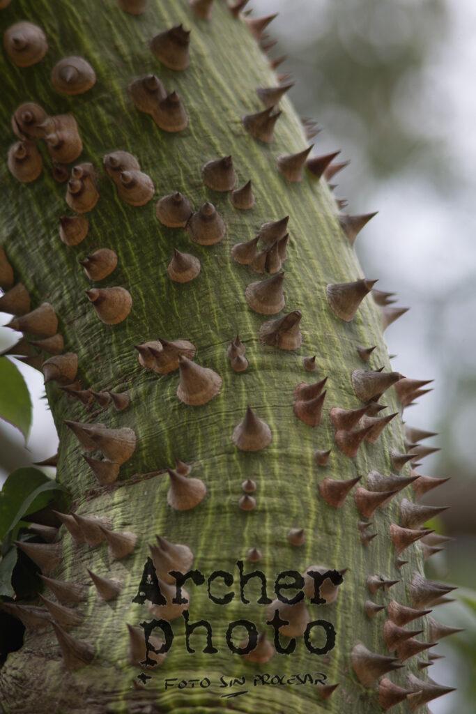 Ejemplo de foto con el Tamron 200-400 sin procesar, Archerphoto, fotógrafo en València, tronco con pinchos