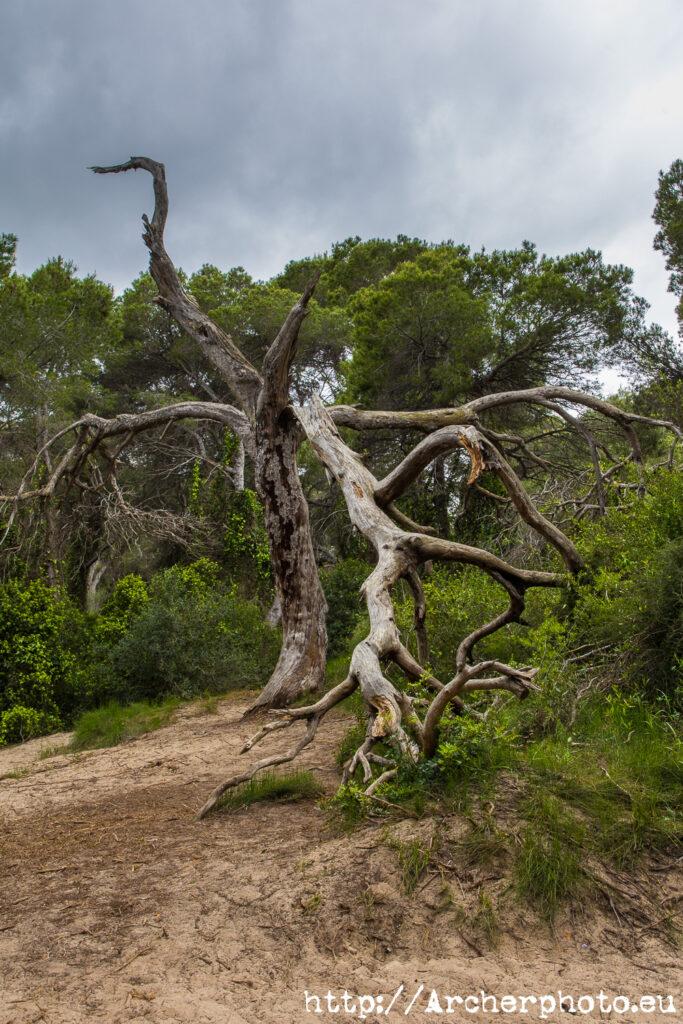 Color: un árbol y tres procesos por Archerphoto, fotógrafo profesional.