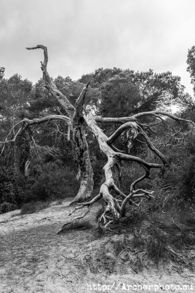 Blanco y negro: un árbol y tres procesos por Archerphoto, fotógrafo profesional.