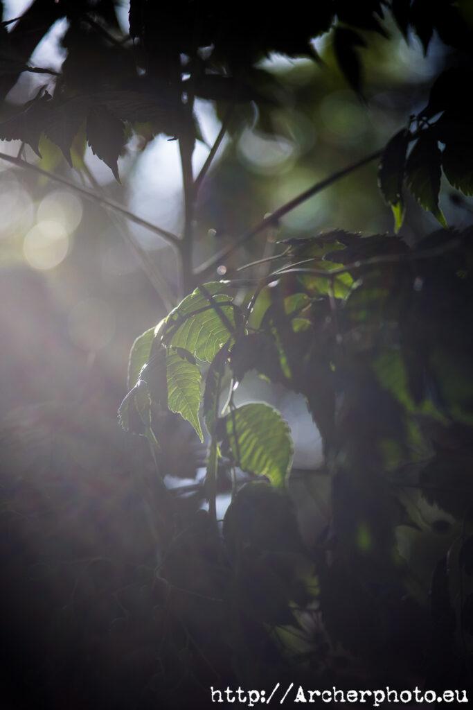 EOS R6 con Carl Zeiss Jena 135 Sonnar F4., hojas de un árbol con bokeh, por Sergi Albir, fotógrafos València